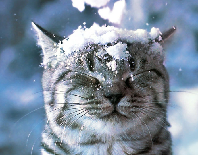 winter_snow_cats_animals_closed_eyes_1280x1024wallpaper_www.wall321.com_99